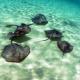 Marine Conservation of the Mediterranean